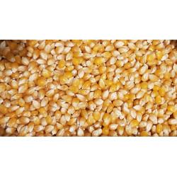 Maïs à pop corn 250g