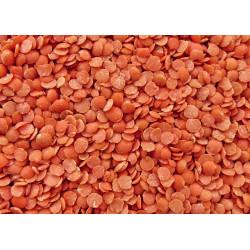 Lentilles corail 250g